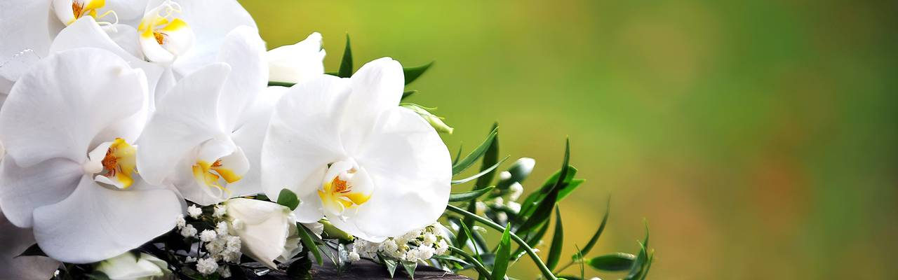 White flowers, seminar Alsace, hotel Le Marechal