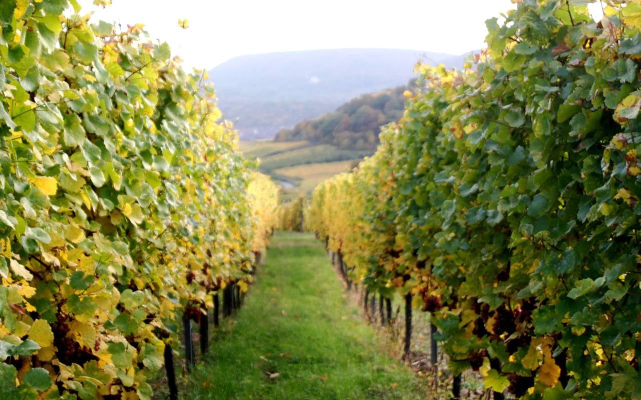 Vignes, week end colmar, Hôtel Le Maréchal